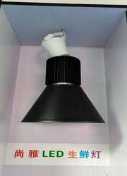 LED 生鲜灯4